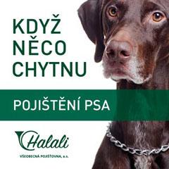 Halali - pojištění psa