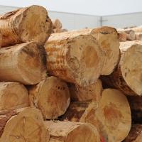 Dřevařství