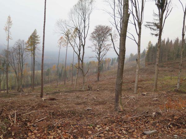 Ministr Milek na Bruntálsku informoval o prioritách ohledně kůrovcové kalamity