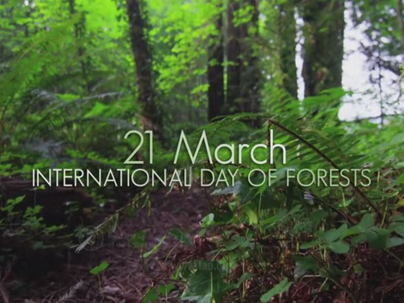 International Day of Forests 2015