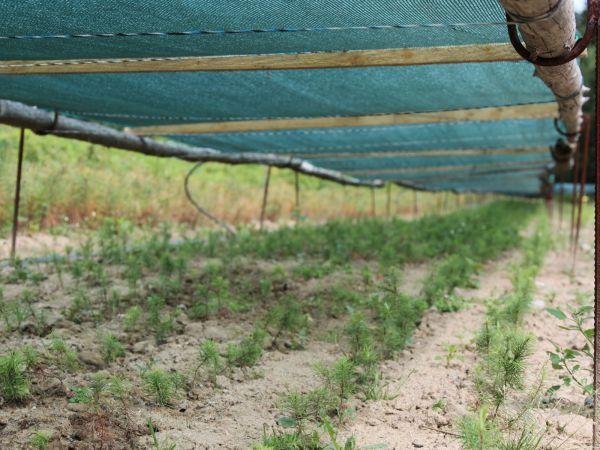 ČTK: Lesní školky mění sortiment, obnovu lesů brzdí sucho