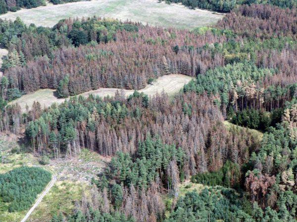SVOL požaduje zvýšení dotací pro lesníky v roce 2020 na pět miliard