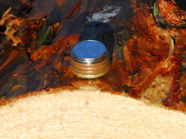 SVOL: Návrh státního rozpočtu na příští rok je k lesům macešský