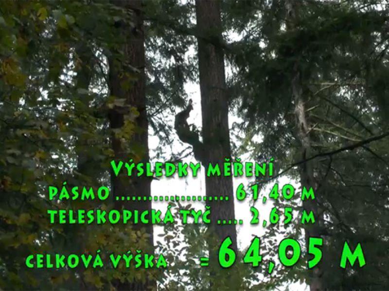 Měření nejvyššího známého stromu v ČR