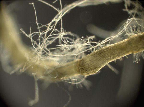 """Cílem hub není podporovat harmonii lesů jako """"superorganismů"""""""