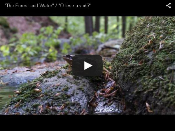 """The Forest and Water"" / ""O lese a vodě"""