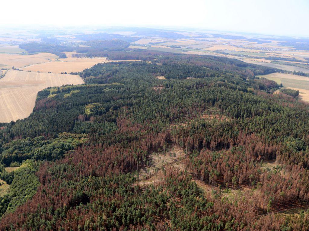 Výsledek obrázku pro kůrovcová kalamita vysočina