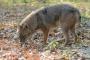 Vysoké Taury: Predátoři nejsou v národním parku vítáni