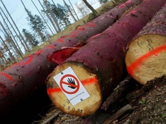 Lesy ČR: Situace s kůrovcem na Bruntálsku je nejhorší v republice
