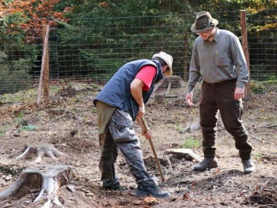 Do Dne za obnovu lesa se zapojilo 31 tisíc dobrovolníků