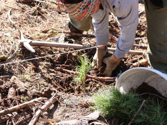SVOL: Na podporu lesního hospodářství bude v roce 2021 potřeba 10 miliard