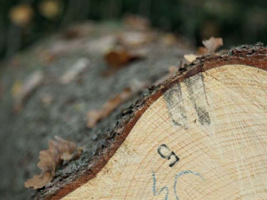Lesnictví je z pohledu lidských zdrojů v krizi