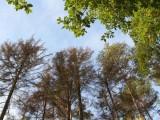 Loňské sucho způsobilo v jihočeských lesích škody za miliony