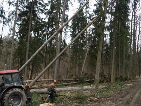 Vichřice Herwart v ČR pravděpodobně poškodila téměř 3 miliony kubíků dříví