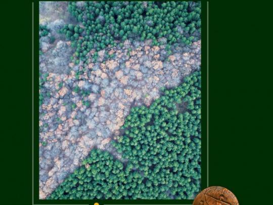 Nová publikace Meliorační a zpevňující funkce lesních dřevin