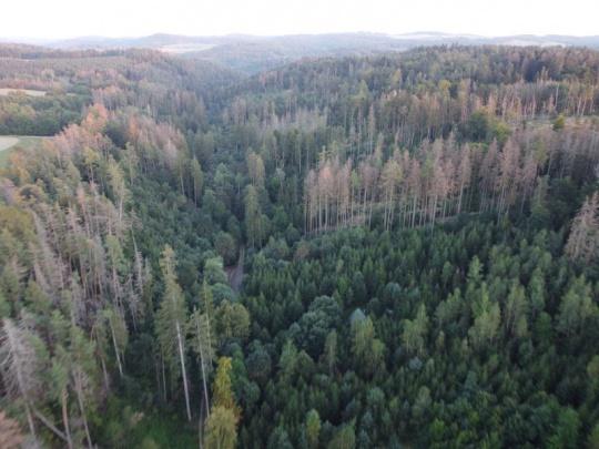 Zástupci lesnicko-dřevařského sektoru se důrazně ohradili proti vyjádření Hnutí DUHA