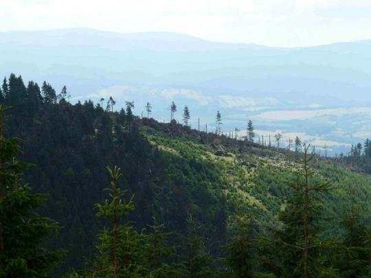 Lesům ČR se podařilo zpracovat následky loňské červencové vichřice