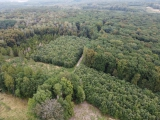Zdanění příspěvků na hospodaření v lesích