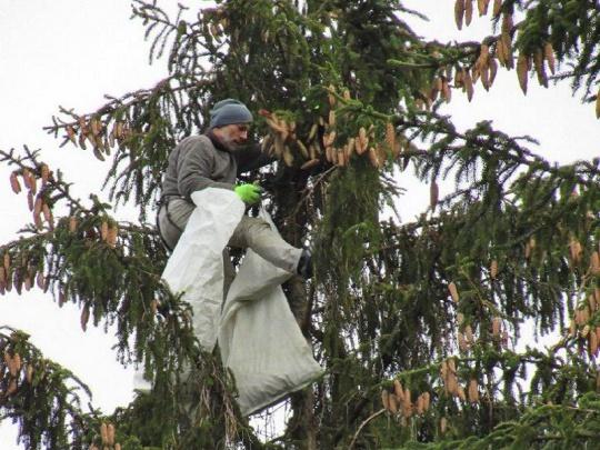 O Národní bance osiva lesních dřevin