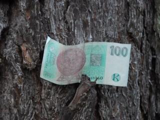 Lesy ČR měly v 1. pololetí hrubý zisk 4,01 miliardy Kč