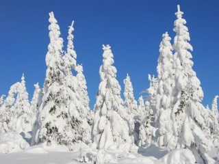 Rakouské spolkové lesy bilancují