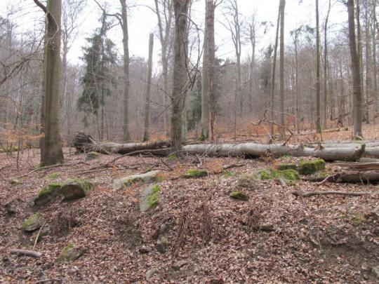 Lesníci volají po zachování náhrad újmy za ochranu přírody