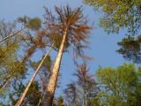 Sucho a kůrovec letošním společným nepřítelem lesů