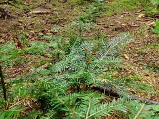 Bavorské státní lesy zvýšily zisk o 5,5 milionů eur