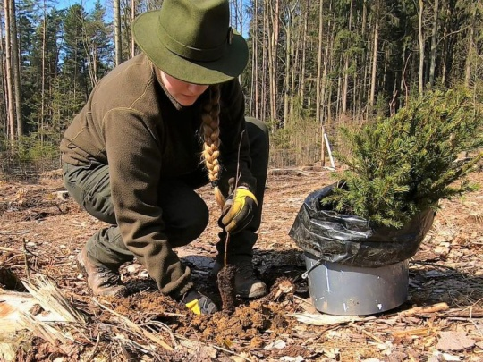 """VIDEO: Obnova lesa """"zeleným nahoru"""" nemusí vždy stačit"""