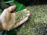 LČR připravily z úrody dřevin osivo pro vypěstování až 180 milionů sazenic