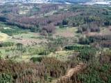 Těžba na Vysočině stoupá, kalamita potrvá i příští rok