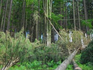 Bouře Xavier zanechala významné škody v lesích Braniborska