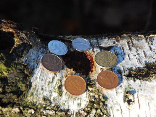 MZe chce znovu přerozdělovat příspěvky na hospodaření v lesích
