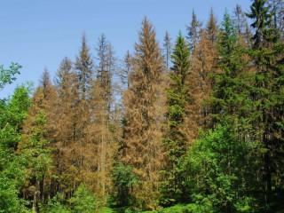 Seminář LOS: sucho otevřelo dveře škůdcům lesa
