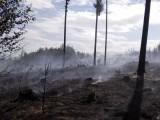 Lesy ČR varují před zvýšeným rizikem vzniku požárů