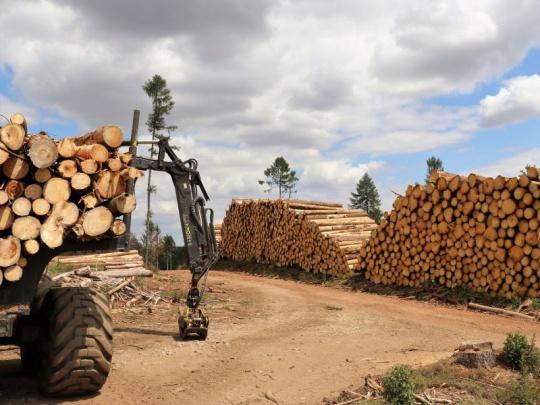 Chladné počasí loni pomohlo ALSOL snížit objem kůrovcových těžeb