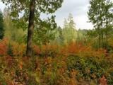 Proces certifikace lesů systémem FSC (Forest Stewardship Council)