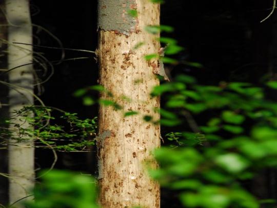SVOL: Zákaz úmyslných těžeb zlikviduje nestátní vlastníky lesů