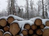 Lesy ČR znásobí nabídku dřeva k samovýrobě, spouští přímý prodej