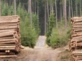 Lesy ČR vypsaly tendr na lesní práce a těžbu 2017+