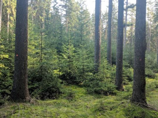 Prezident podepsal novelu lesního zákona