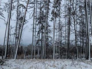 Lichtenštejnové neuspěli u Ústavního soudu ve sporu o les u Říčan