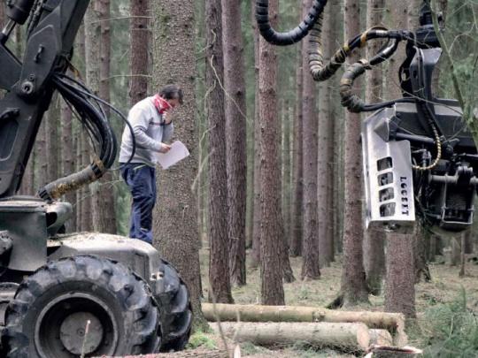 Anketa Lesnické práce: Dopady nouzového stavu na lesnicko-dřevařský sektor