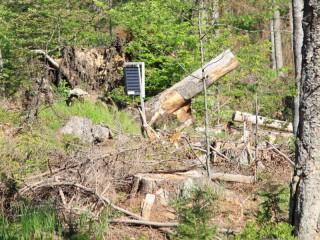 Těžba dřeva v Olomouckém kraji kvůli kůrovci výrazně vzrostla