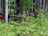 Pro Silva Bohemica: Podpořte nepasečné lesnické hospodaření
