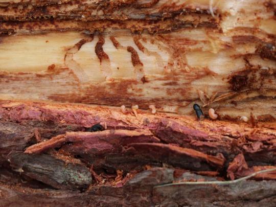 Evropská komise povolila dotaci pro vlastníky kůrovcových lesů