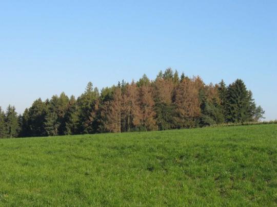 Rok 2015 i výhledy do roku 2016 podle majitelů a správců lesů