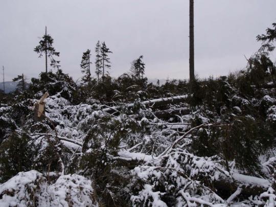 Před 10 lety udeřil na české lesy orkán Kyrill
