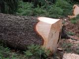 Těžba dřeva loni překročila devatenáct milionů metrů krychlových