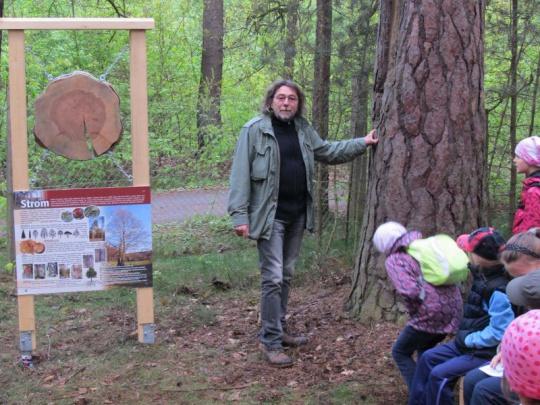 Arboretum Sofronka v Plzni, známé kolekcí borovic, slaví 60 let